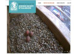 Kalamazoo Peregrine falcon eggs