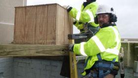 Peregrine Falcon Nest Box Installation