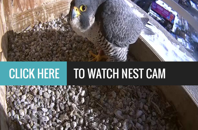 Watch the Nest Cam